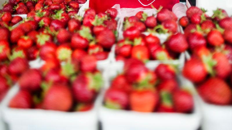 Forgubbning i jordgubbsbranschen